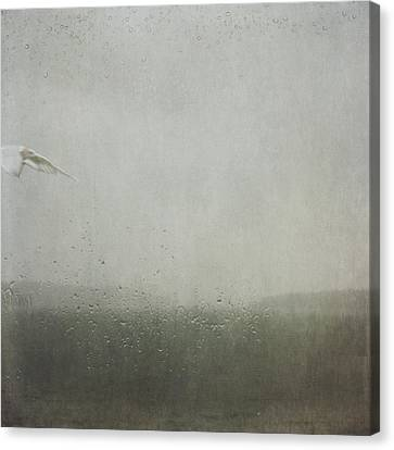 Canvas Print featuring the photograph Fly Between The Raindrops by Sally Banfill