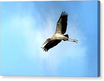 Fly By 2 Canvas Print