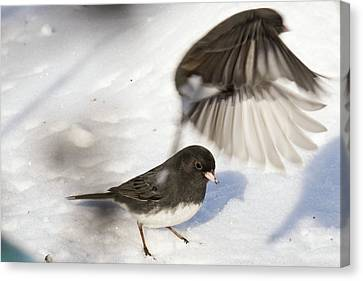 Fly By Canvas Print by Gary Wightman