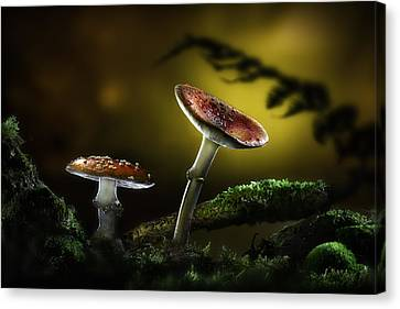 Fly Mushroom - Red Autumn Colors Canvas Print