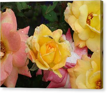 Fly On The Roses Canvas Print by Terry  Wiley