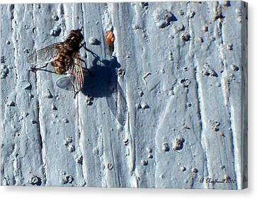 Canvas Print featuring the photograph Fly On The Wall by Betty Northcutt