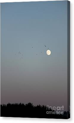 Fly Over The Moon Canvas Print by Carolyn Brown