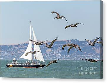 Flyby Canvas Print by Kate Brown