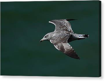 Canvas Print featuring the photograph Flyby by Richard Patmore