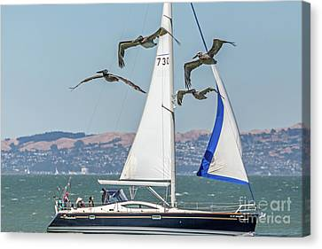 Flyby Two Canvas Print by Kate Brown