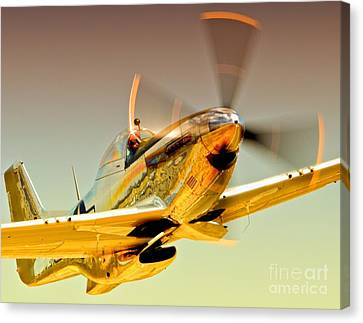 Flyin Golden Boeing North American P-51d Mustang And Brant Seghetti   Canvas Print