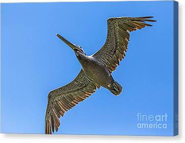 Flying Dino Canvas Print by Kate Brown