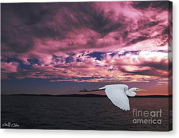 Flying Egret In Sea Sunset  Original Exclusive Photo Art. Canvas Print by Geoff Childs