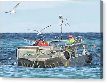 Canvas Print featuring the photograph Flying Fish by Randy Hall