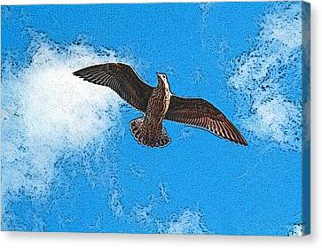 Flying Seagull Canvas Print - Flying Free by Ben Freeman