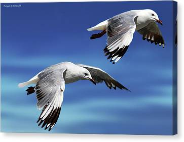 Flying High 0064 Canvas Print