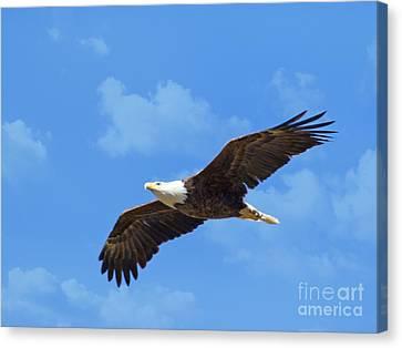 Flying High Canvas Print by Geraldine DeBoer