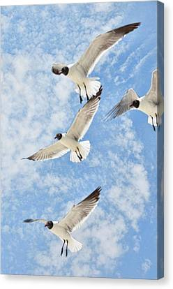 Canvas Print featuring the photograph Flying High by Jan Amiss Photography
