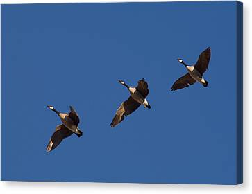 Canvas Print featuring the photograph Flying In Formation by Monte Stevens