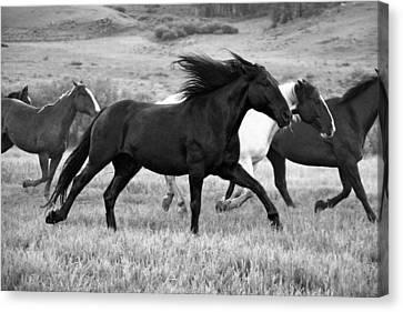 Black And White Horse Canvas Print - Flying Mane by MH Ramona Swift