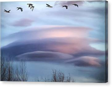 Flying South Canvas Print by Donna Kennedy