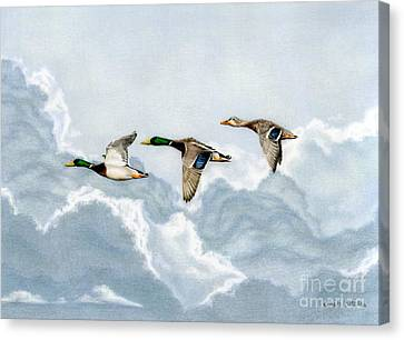 Trio Canvas Print - Flying South by Sarah Batalka
