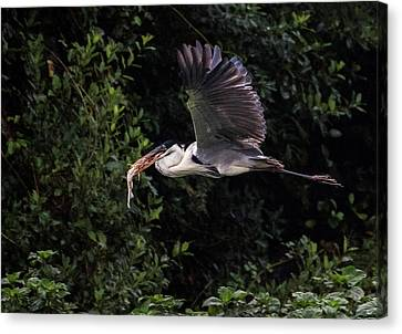Canvas Print featuring the photograph Flying With Lunch by Wade Aiken