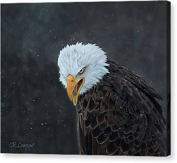 Focused Canvas Print by CR Courson