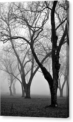 Fog 1 Canvas Print by Beverly Hammond