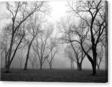 Fog 3 Canvas Print by Beverly Hammond