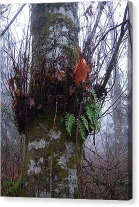 Fog And Ferns Canvas Print by Ken Day