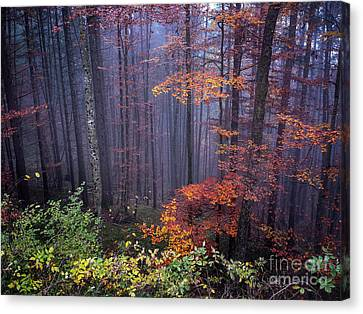 Canvas Print featuring the photograph Fog And Forest Colours by Elena Elisseeva