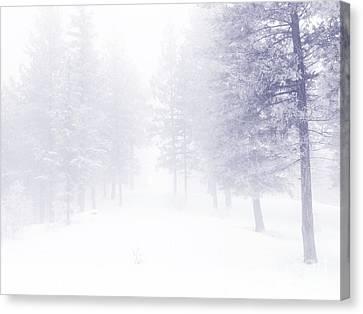 Fog And Snow Canvas Print by Tara Turner