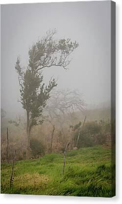 Fog And Wind Canvas Print