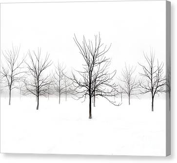 Fog And Winter Black Walnut Trees  Canvas Print