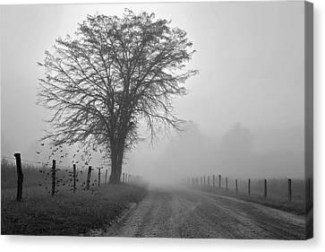 Fog Covered Lane Canvas Print