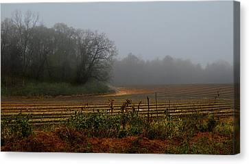 Fog In The Field Canvas Print