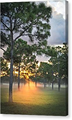 Fog In The Forest Canvas Print by Debra and Dave Vanderlaan