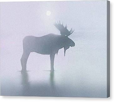 Bull Canvas Print - Fog Moose by Robert Foster