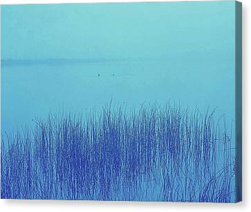 Canvas Print featuring the photograph Fog Reeds by Laurie Stewart