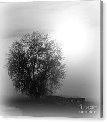 Fog Tree Canvas Print by Barbara Henry