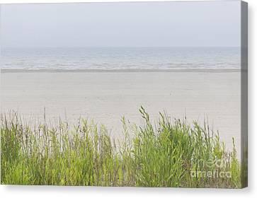 Foggy Beach Canvas Print by Elena Elisseeva