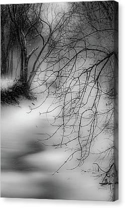 Foggy Feeder Canvas Print