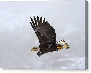 Foggy Flight Canvas Print by Mike  Dawson