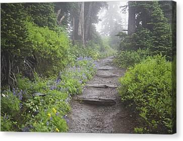 Foggy Day Canvas Print - Foggy Forest Path by Craig Tuttle