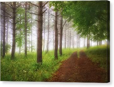 Foggy Forest - Retzer Nature Center Trails Canvas Print by Jennifer Rondinelli Reilly - Fine Art Photography