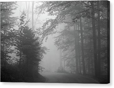 Foggy Forest Canvas Print by Yago Veith