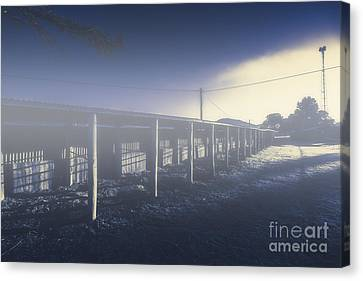 Foggy Horse Stables Canvas Print