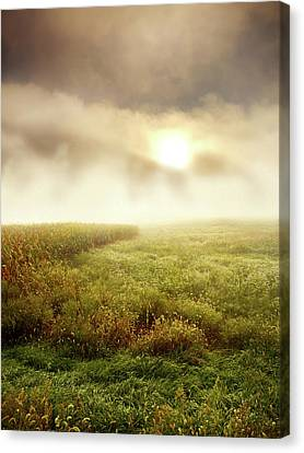 Foggy Meadow Canvas Print by Phil Koch
