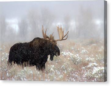 Canvas Print featuring the photograph Foggy Moose Silhouette by Adam Jewell
