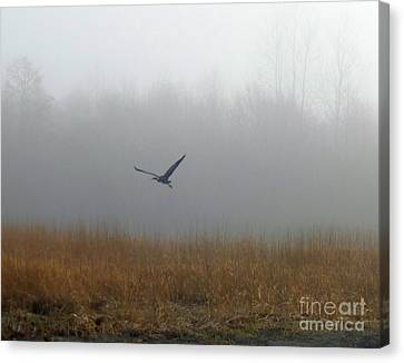 Foggy Morning Heron In Flight Canvas Print by Helen Campbell