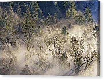 Foggy Morning In Sandy River Valley Canvas Print by David Gn