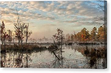 Foggy Morning In The Pines Canvas Print