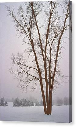 Foggy Morning Landscape 13 Canvas Print by Steve Ohlsen